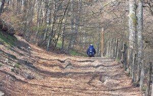 Peregrino atravesando un espeso bosque gallego.