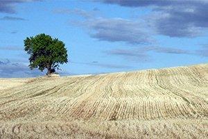 camino-frances-estella-burgos-itinerariocopia5